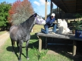 horse-riding-other3